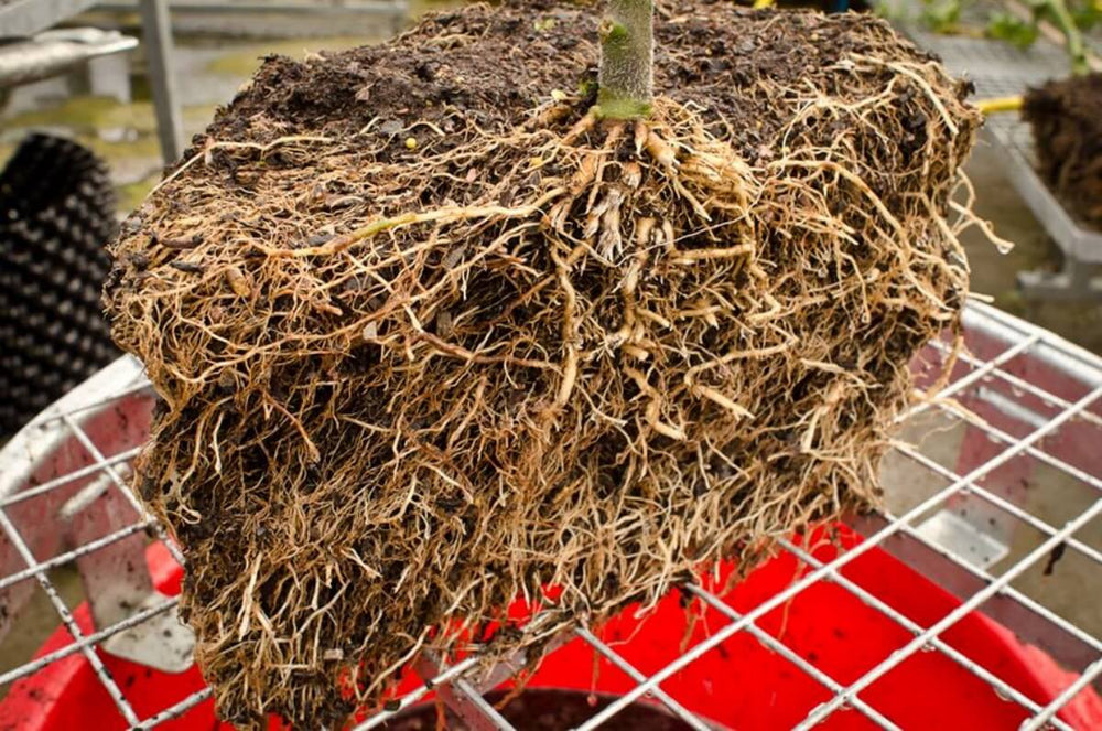 Air-Pot Garden Large Tomato Root Cutaway