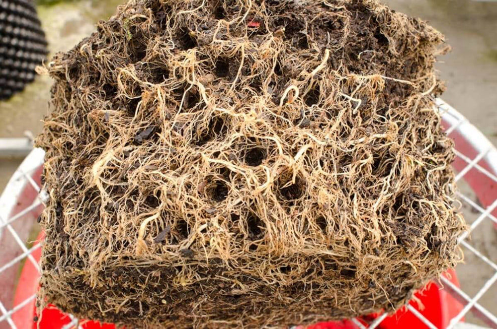 Load image into Gallery viewer, Air-Pot Garden Large Tomato Roots
