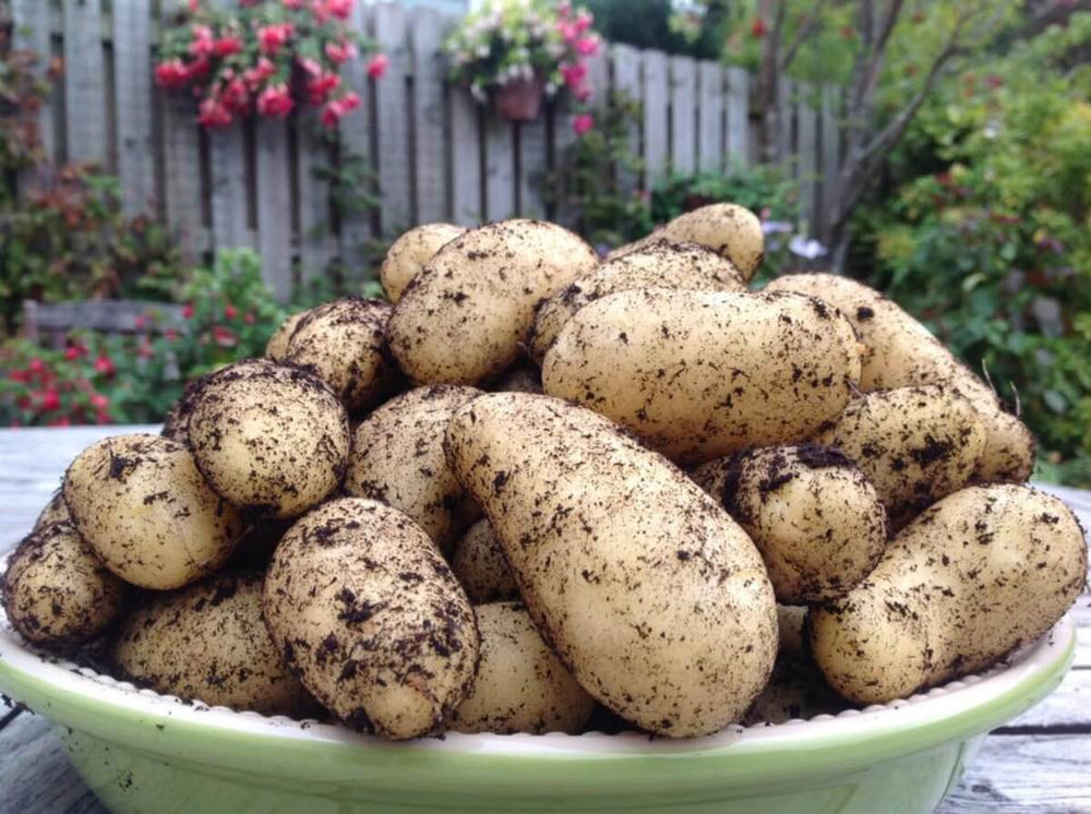 Load image into Gallery viewer, Air-Pot Garden Potato Tower Bowl