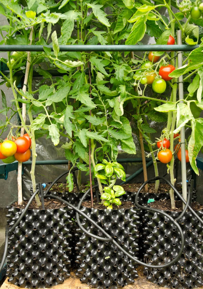 Air-Pot Garden Small Tomato