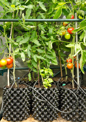 Load image into Gallery viewer, Air-Pot Garden Small Tomato