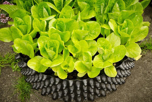 Load image into Gallery viewer, Air-Pot Garden Salad Tray Closeup