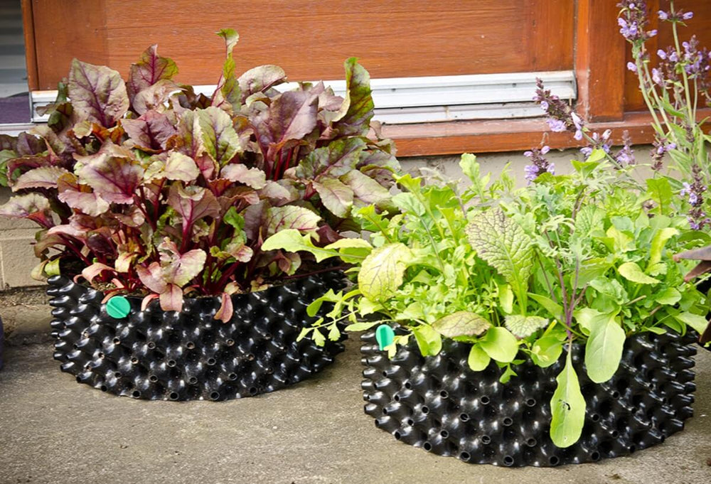 Load image into Gallery viewer, Air-Pot Garden Salad Tray Far Away