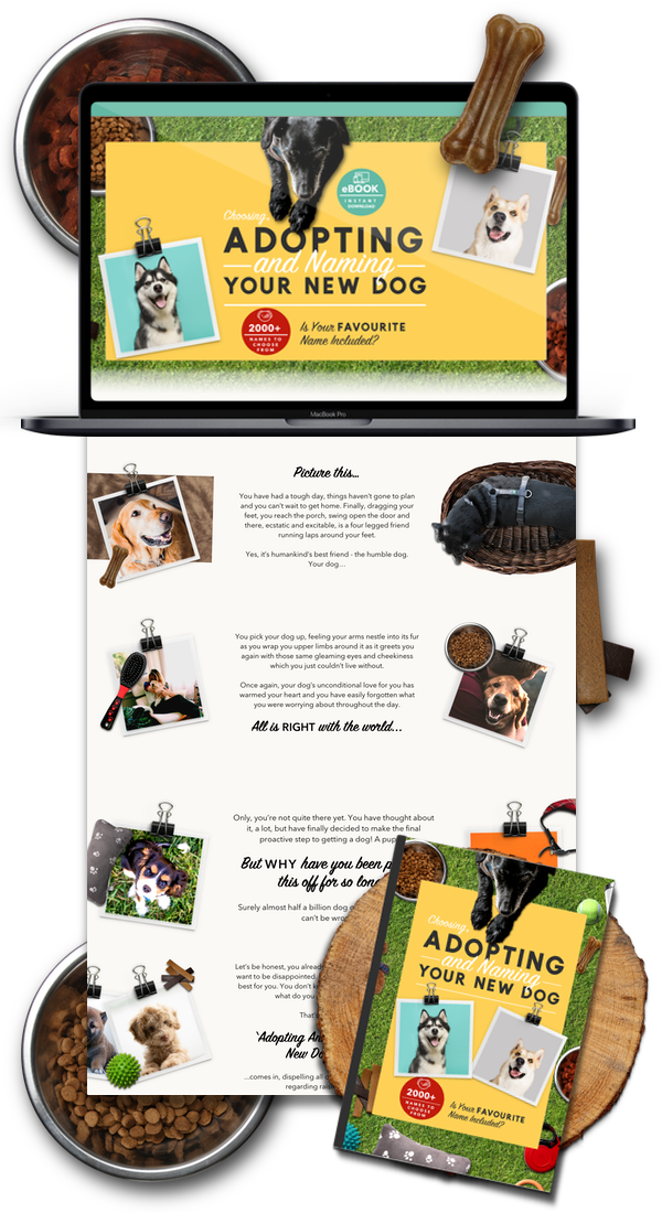 Dog Niche Shopify Website Business For Sale - Startup Streams