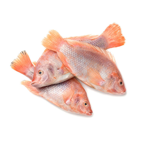 Red Tilapia (Whole)