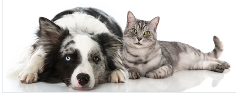 Pet wellness CBD for dogs and cats