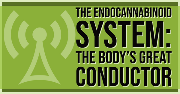 The Endocannabinoid System – The Body's Great Conductor
