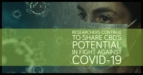 Researchers Continue to Share CBD's Potential in Fight against COVID-19.