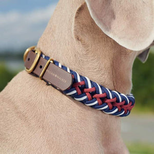 Paracord Hundehalsband Royal - William WALKER