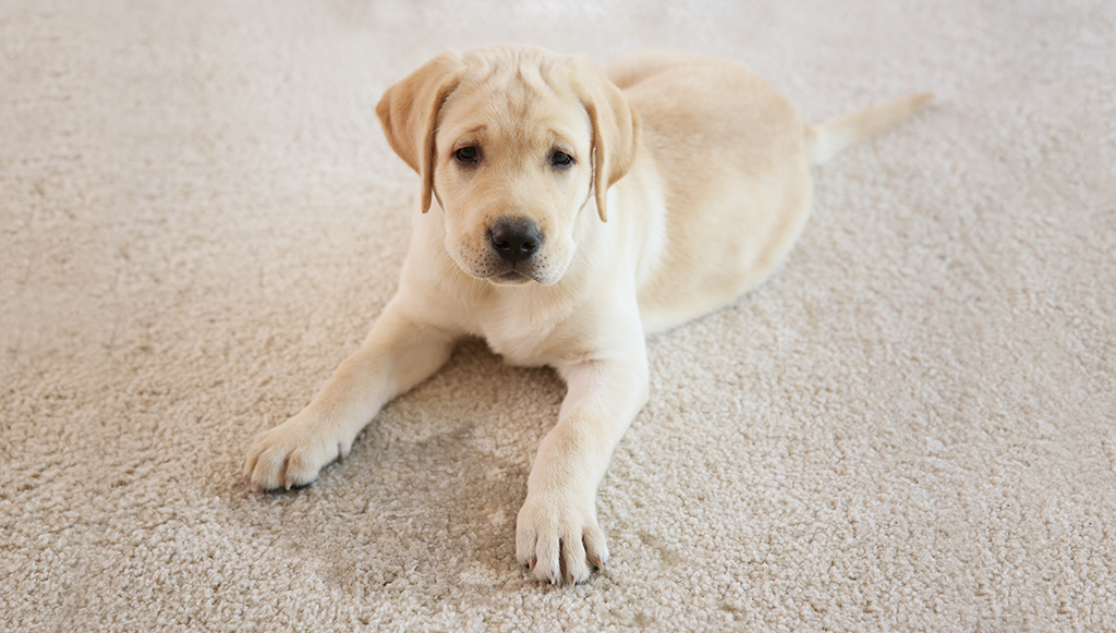 Cleaning Up After Your Pet—Made Easy!