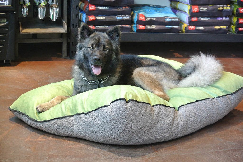 The Perfect Pet Bed: No Longer Just a Dream