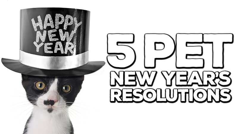 5 New Year's Pet Resolutions