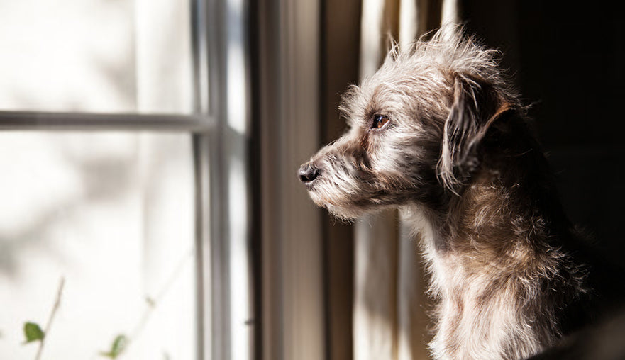 3 Quick Tips For Dealing With Pet Separation Anxiety