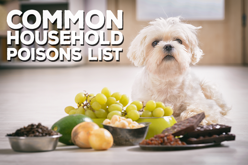 Common Household Items That Are Poisonous to Pets