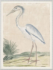 GORDON - GREY HERON, 1778