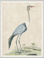 GORDON - WATTLED CRANE, 1778