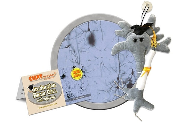 Giant Microbes Original Graduation Brain Cell with Diploma - Planet Microbe