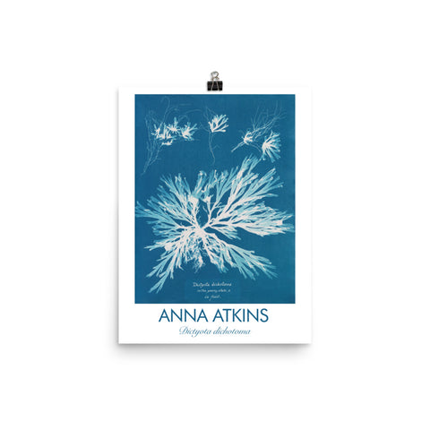 "Anna Atkins, Encyclopedia poster, ""Dictyota Dichotoma"", Algae Cyanotype. Vintage Art Print Wall Decor, Fine Wall Art Gift"