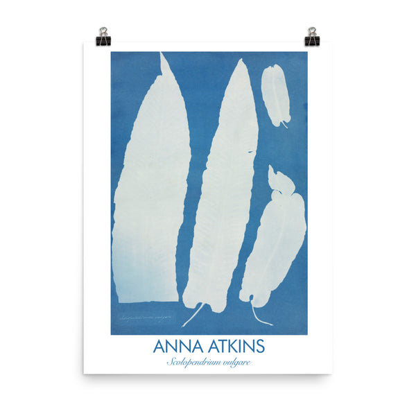 "Anna Atkins, 1995, Encyclopedia poster, ""Scolopendrium Vulgare"". Vintage Art Print Wall Decor, Fine Wall Art Gift"
