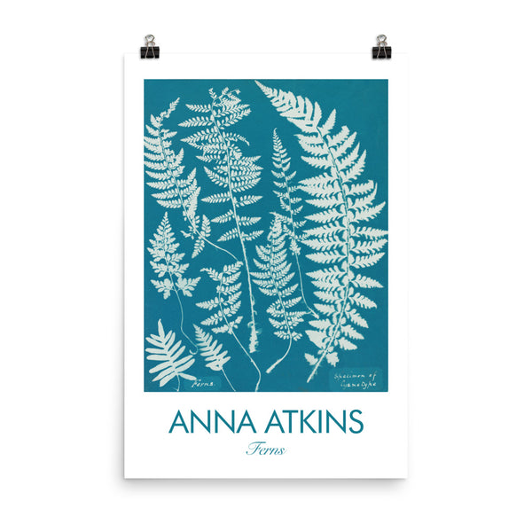 "Anna Atkins, 1840, Encyclopedia poster, ""Specimen of Cyanotype"",  Ferns. Vintage Art Print Wall Decor, Fine Wall Art Gift"
