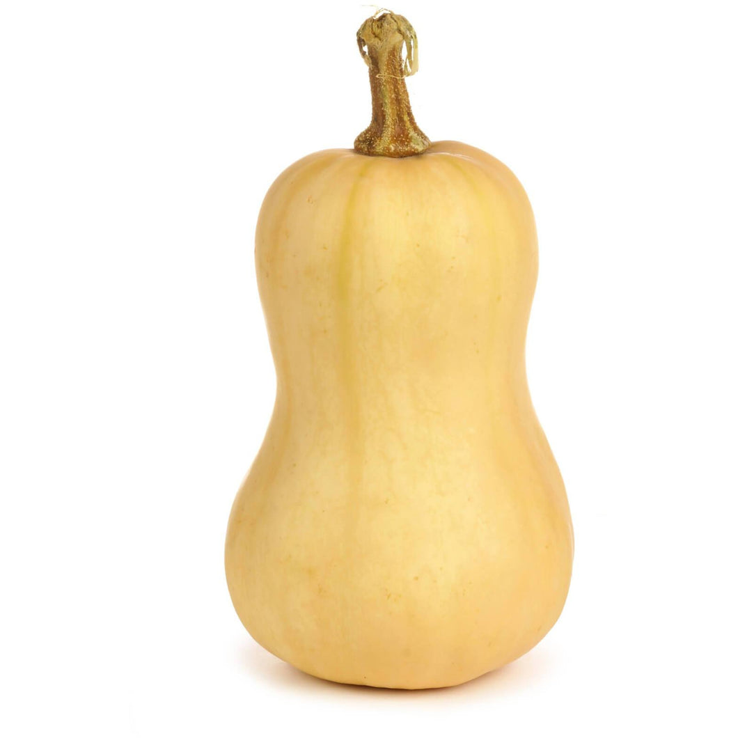 BUTTERNUT SQUASH <br>(Each)