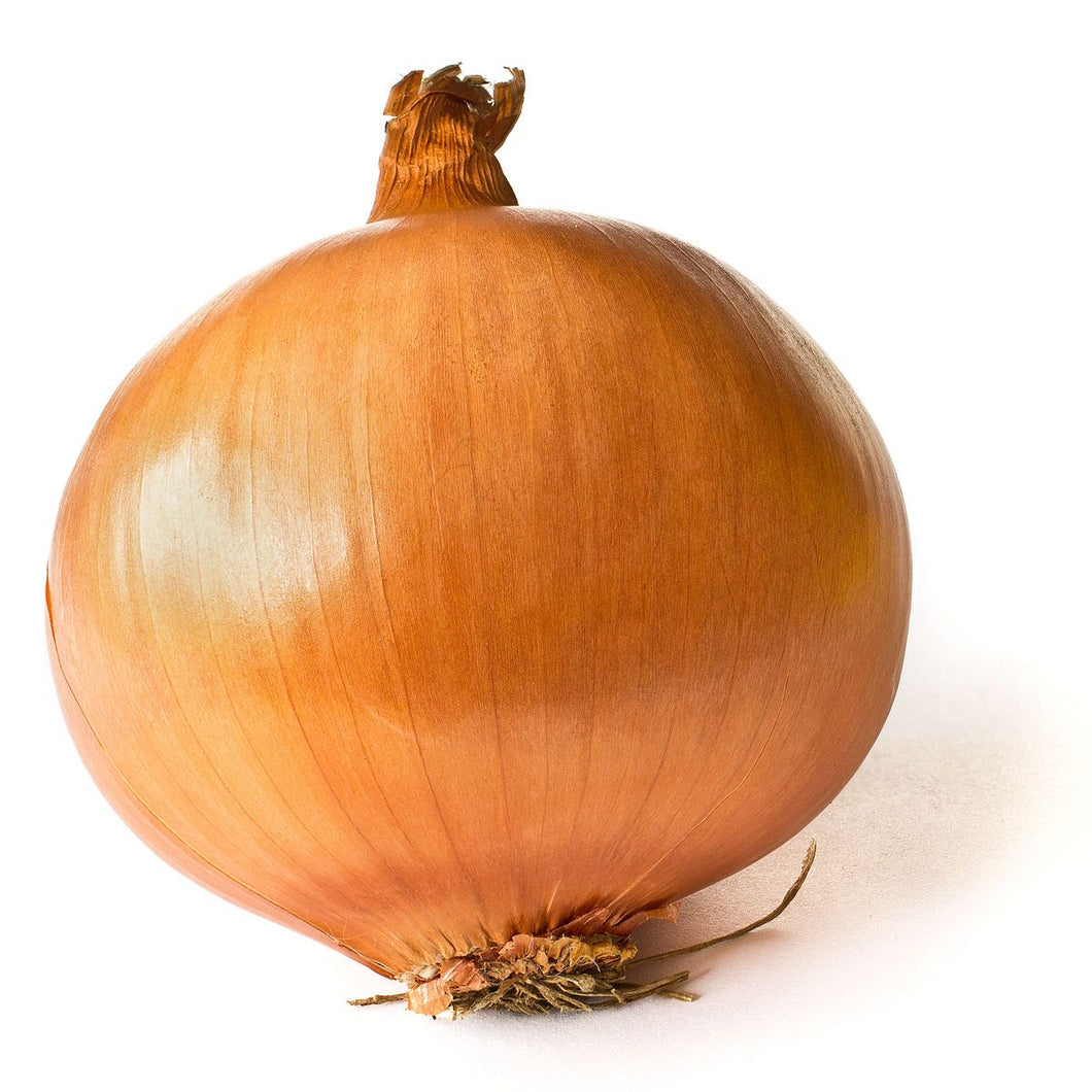 ONION BROWN <br>(x6)
