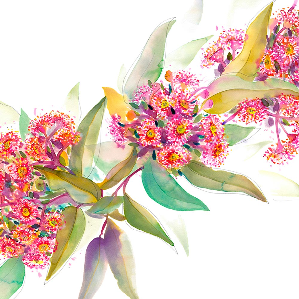 'Ashmore's Flowering Gum' Greeting Card