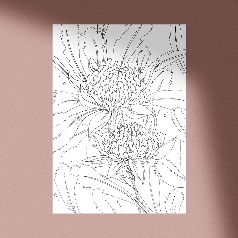 'Waratah' Colouring-in Template