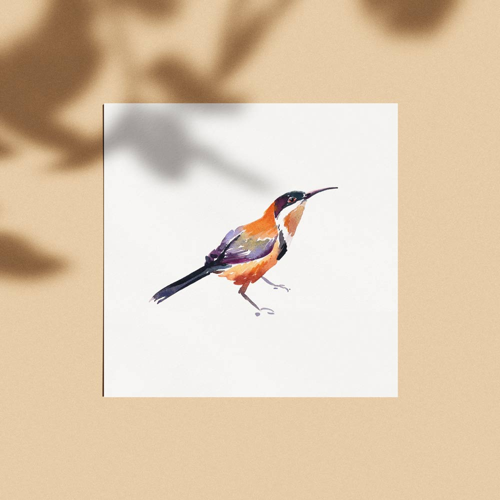 'Eastern Spinebill' Limited Edition Print