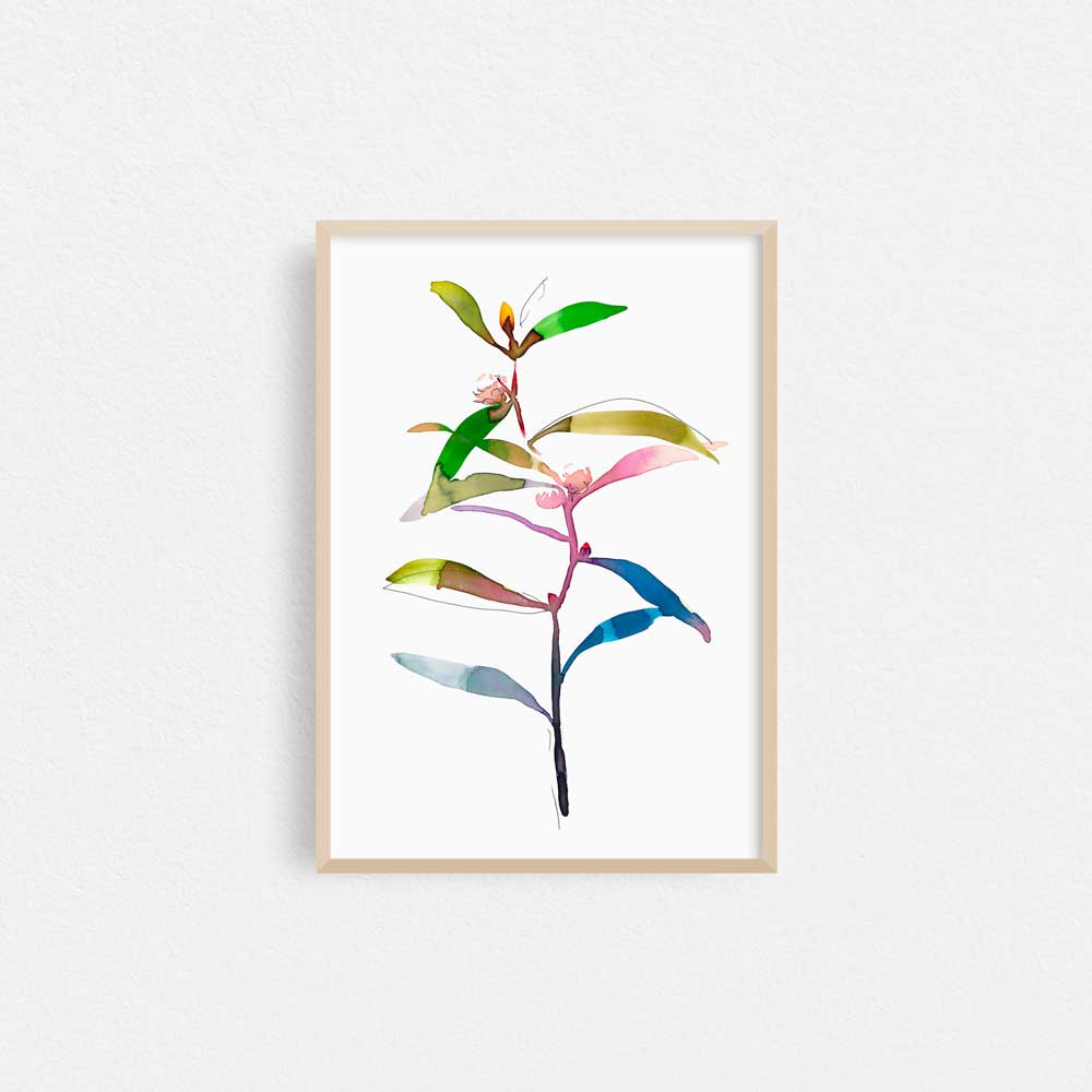 'Hakea Bud' Limited Edition Print