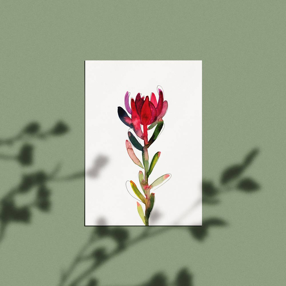 'Untitled (Leucadendron)' Limited Edition Print