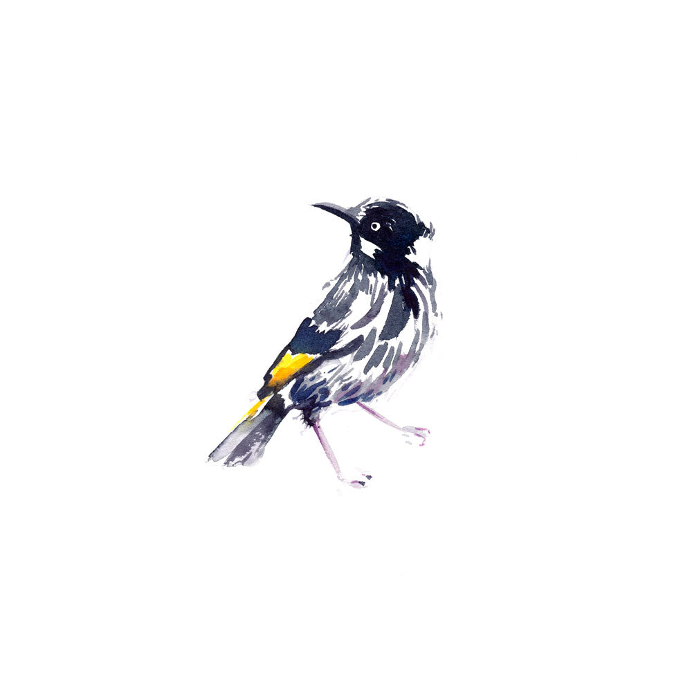 'New Holland Honeyeater' Limited Edition Print