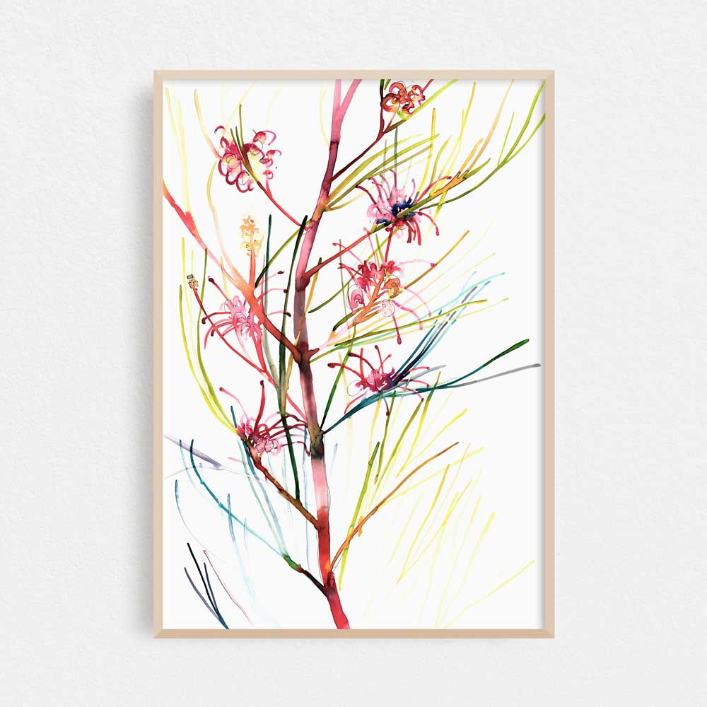 'Roger's Grevillea' Limited Edition Print