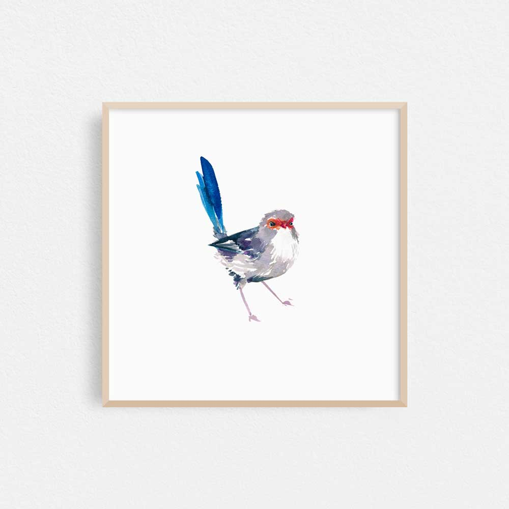 'Splendid Fairy Wren Female' Limited Edition Print