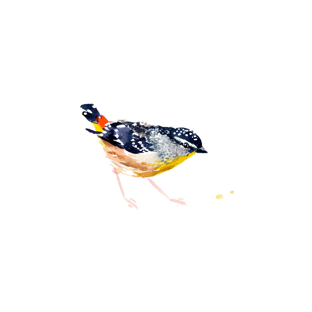 'Spotted Pardalote' Limited Edition Print