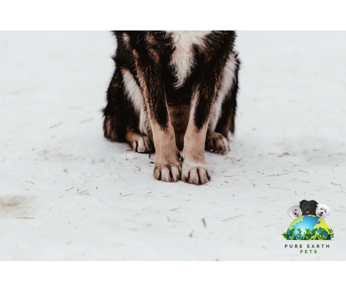 Your Dog's Ecological Paw Print: What to Do with Your Dog's Poop