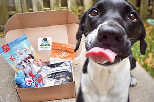 Eco Friendly Subscription Box for Dogs Pure Earth Pets