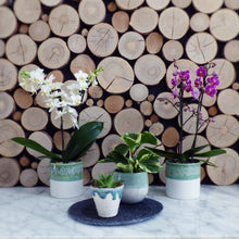 Load image into Gallery viewer, Mini Orchid Duo in Ceramics