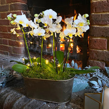 Load image into Gallery viewer, Glam Orchid Planter with Lights