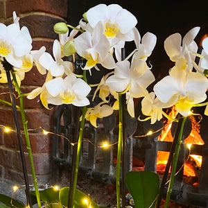 Glam Orchid Planter with Lights