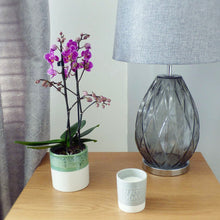 Load image into Gallery viewer, Mini Orchid in Ceramic