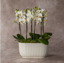 Load image into Gallery viewer, Trio Orchid Luxury Planter