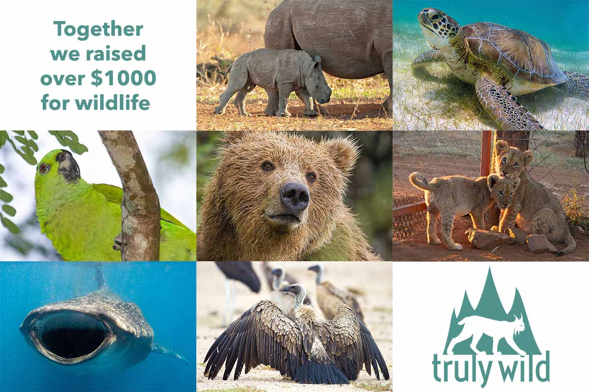 we raised over $1000 for wildlife conservation