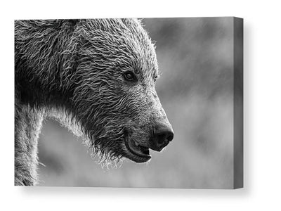 Grizzly bear portrait in black and white canvas