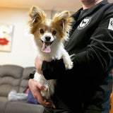 Chi-pap held by man in New Zealand Chihuahua Rescue Trust shirt