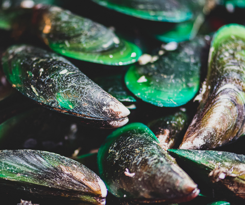 Green Lipped Mussels for dogs