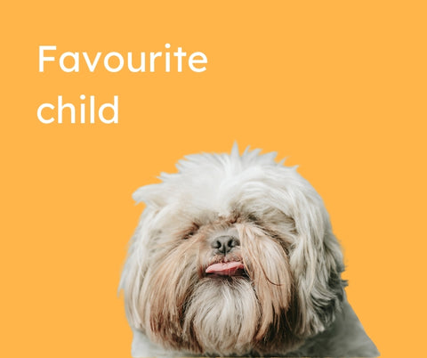 """A shaggy white dog on a yellow background with the words """"favourite child"""""""
