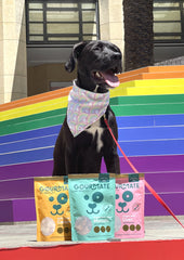 Dexter the dog poses with Gourmate Pet Treat Co. products against rainbow steps