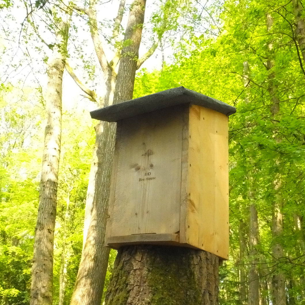 The BfD Bee House (Pine)