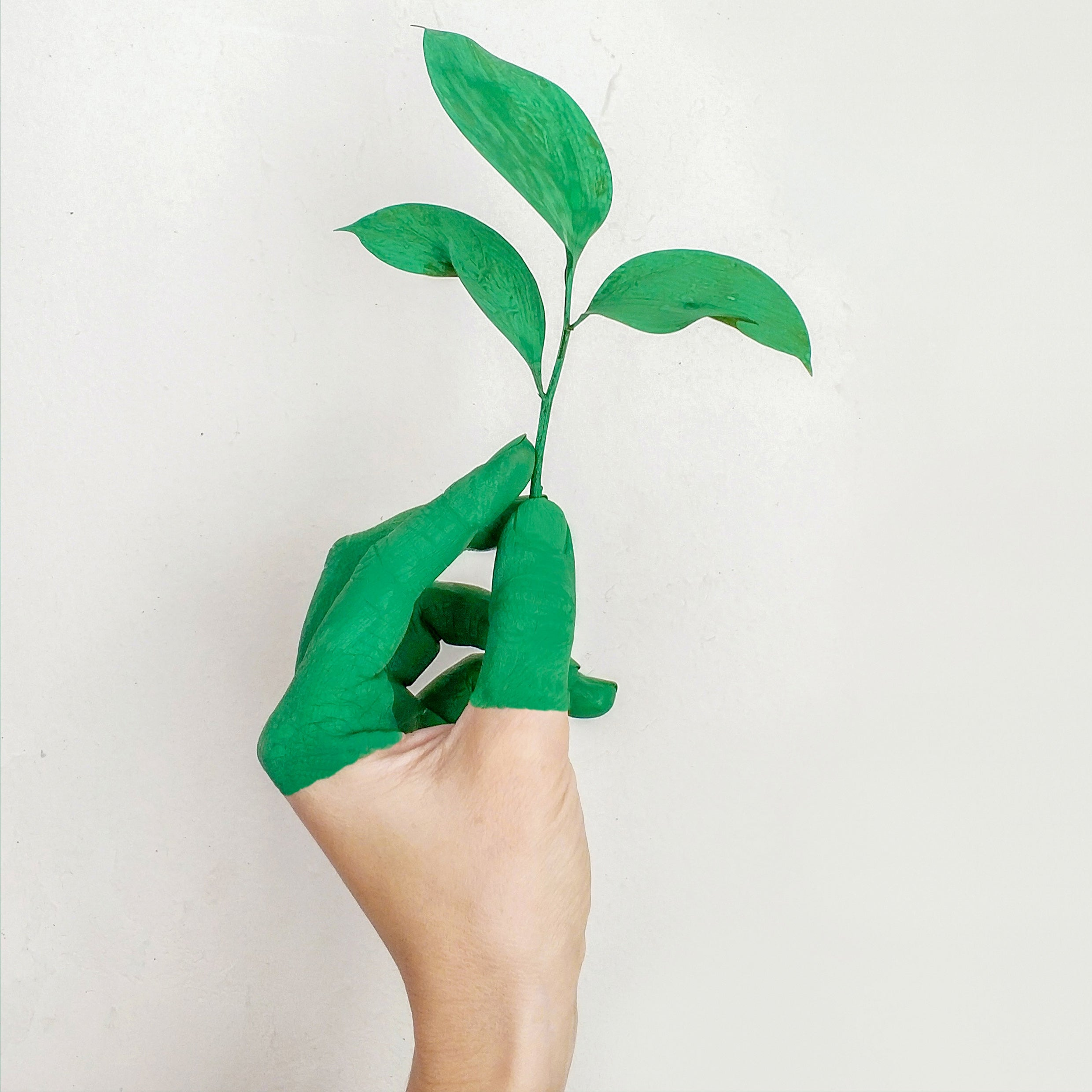 green painted hand holding plant seedling